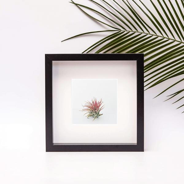 framed air plant photo