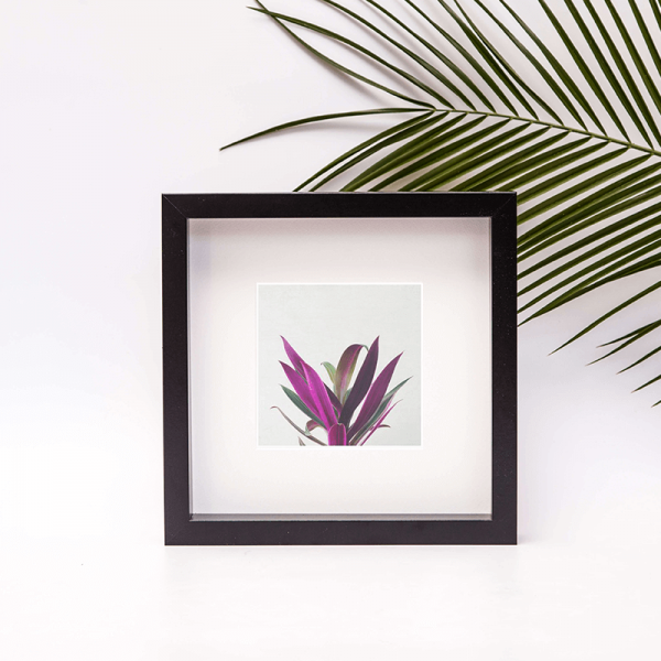 purple and green plant boat lily framed photo print
