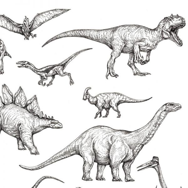 dinosaur drawing close up