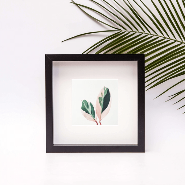 framed photo of pink leaves two pale pink and dark green leaves