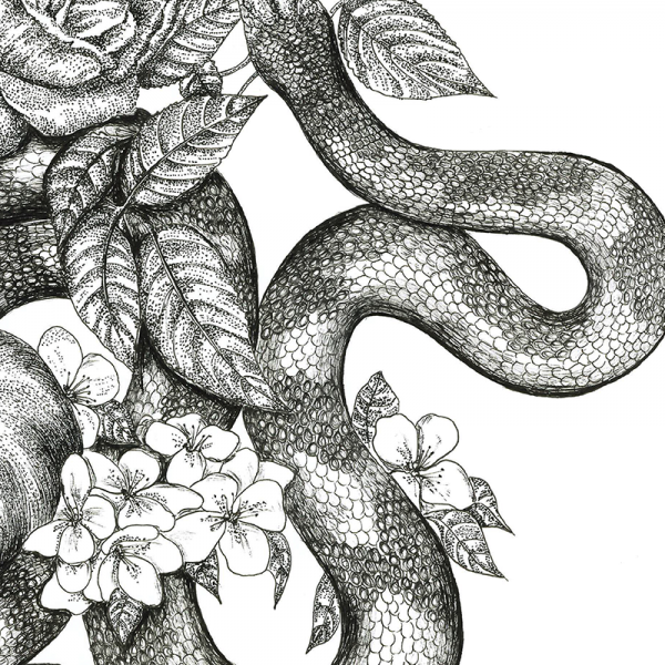 snake illustration close up