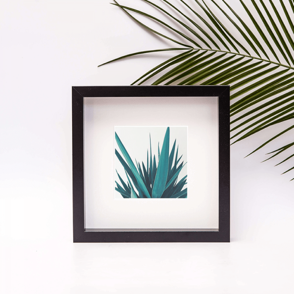 close up detail photo of a yucca in frame
